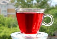 Chá vermelho da flor do hibiscus no fundo verde Imagens de Stock