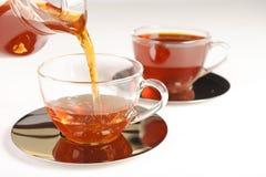 Chá vermelho saudável do arbusto de África do Sul Fotografia de Stock
