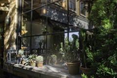 Châssis de fenêtre décoré du pot de plante verte Photographie stock libre de droits