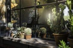 Châssis de fenêtre décoré du pot de plante verte Image stock