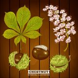 Châtaigne Autumn Botanical Vector Illustration Image stock