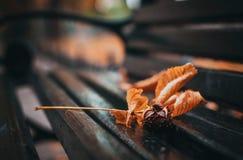 Châtaigne et feuilles sur le banc images stock