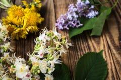Châtaigne, lilas et pissenlit photos libres de droits