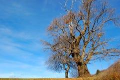 Châtaigne solitaire Photo libre de droits