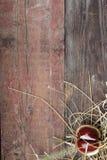 Châtaigne sur un conseil en bois Photographie stock libre de droits