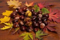 Châtaignes d'automne Photos libres de droits