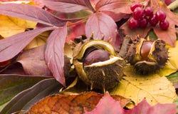 châtaignes d'automne Photographie stock libre de droits