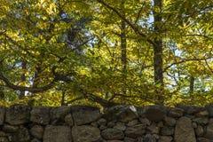 Châtaignes en automne de la forêt de La Herreria, San Lorenzo De Image libre de droits