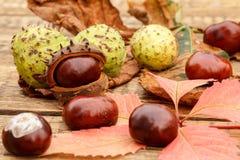 Châtaignes et automne feuilles jaunes et de rouge Photographie stock
