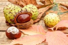 Châtaignes et automne feuilles jaunes et de rouge Image stock