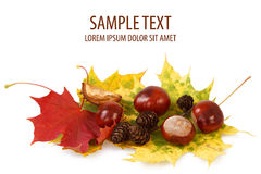 Châtaignes et pinecones colorés de lames d'automne Photo libre de droits
