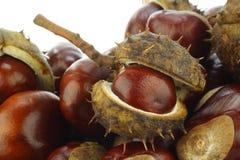 Châtaignes frais tombées (hippocastanum d'Aesculus Photo libre de droits