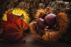 Châtaignes, fruits d'automne Photo libre de droits