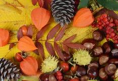 Châtaignes sur des feuilles d'automne Image stock