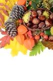 Châtaignes sur des lames d'automne Photographie stock