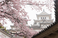 Château blanc de Himeji de château dans la floraison de Sakura de fleurs de cerisier Image stock