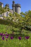 Château d'Arundel dans le Sussex occidental image stock
