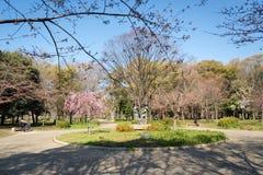 Château d'Osaka à Matsumoto, Japon Photographie stock