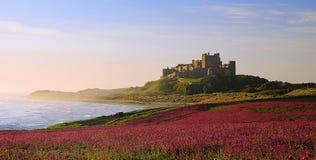 Château de Bamburgh, Northumberland et les lychnides roses photos stock