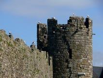 Château de Caernafon, Pays de Galles, R-U Photos stock