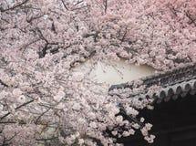 Château de Himeji pendant la saison de fleur de Sakura, Japon Photo libre de droits