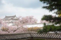Château du Japon Himeji, château blanc de héron dans le beau che de Sakura Photos stock