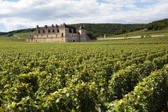 Château français Bourgogne, France, élevage de vignoble de raisins de cuve Image libre de droits