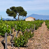 Châteauneuf-du-Pape's Vineyards Stock Photo