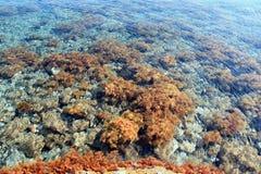 Chão do oceano Imagem de Stock Royalty Free