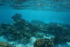 Chão do oceano raso do recife de corais subaquático do oceano fotografia de stock