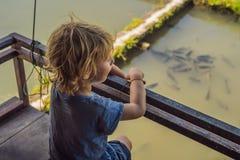 Chłopiec spojrzenia przy rybą w stawie obraz royalty free