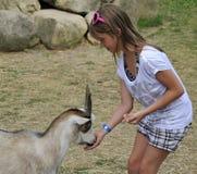 Chèvre amicale alimentante Image libre de droits