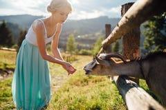 Chèvre de alimentation de fille blonde dans le jardin d'agrément Image stock