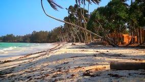 Chèvre de plage de la Tanzanie banque de vidéos