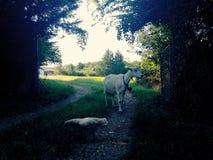Chèvre et poussin Photos stock