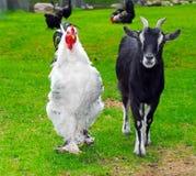 Chèvre et robinet ensemble Photo libre de droits