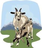 Chèvre et yeanling au pré Images stock