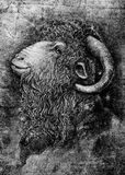 Chèvre ou RAM avec le grand portrait de klaxons images stock