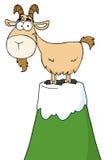Chèvre placé sur une montagne Images stock