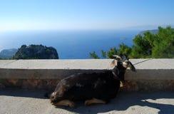 Chèvre se trouvant avec la vue panoramique sur la mer Photos stock