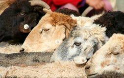Chèvres à vendre Photo stock