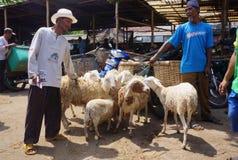 Chèvres Image libre de droits