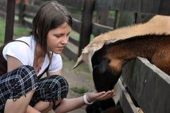 Chèvres alimentantes de fille de Litlle Photographie stock libre de droits