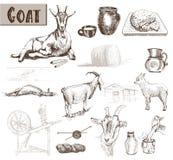 Chèvres d'élevage Images libres de droits