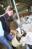 Chèvres d'élevage de femme Images libres de droits
