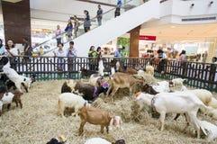 Chèvres dans l'exposition de variété d'animal familier 2013 Images stock
