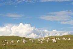 Chèvres dans le pré image libre de droits