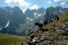 Chèvres dans les montagnes Images libres de droits