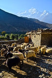 Chèvres dans une montagne image libre de droits