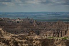 Chèvres de montagne, sommets, buttes et flèches, parc national de bad-lands, écart-type Images stock